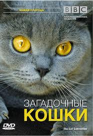 Загадочные кошки